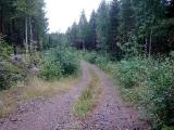 <h5>Tienvarsiniittoa vaile</h5><p>Metsätie ennen raivausta.</p>